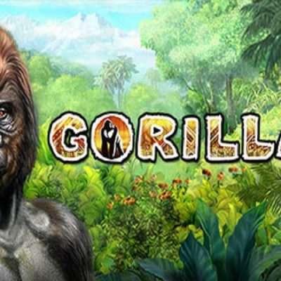 Gorilla Slot